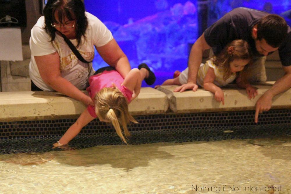 Vegas with Kids! Review of Shark Reef Aquarium at Mandalay Bay