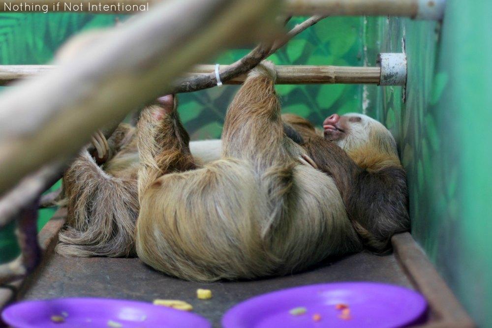 Sloth Sanctuary of Costa Rica Tour