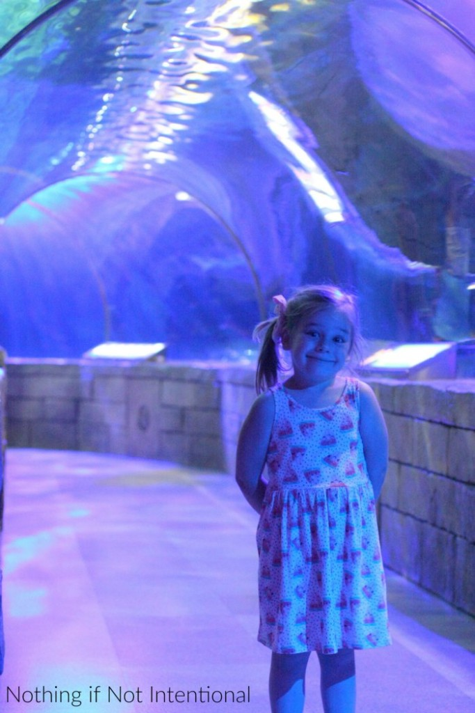 Sea Life Aquarium: Things to do near the Mall of America with kids