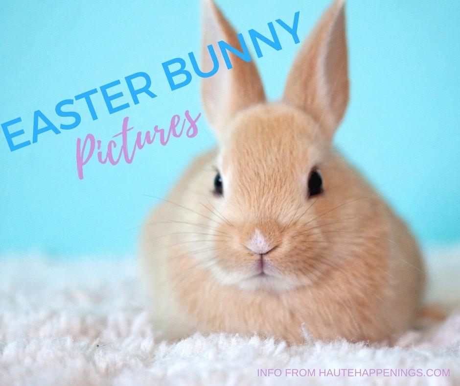 Easter Bunny Pictures in Terre Haute