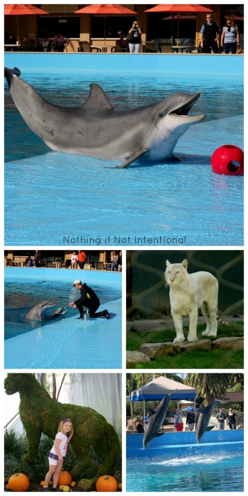 Things to do in Vegas with kids! Siegfried and Roy's Secret Garden and Dolphin Habitat