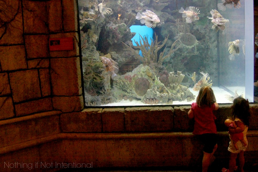 Review of Shark Reef Aquarium at Mandalay Bay