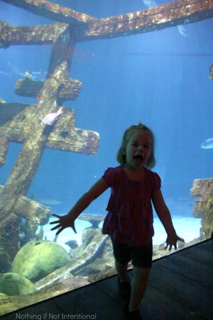Kid-friendly Las Vegas: a trip to Shark Reef Aquarium at Mandalay Bay
